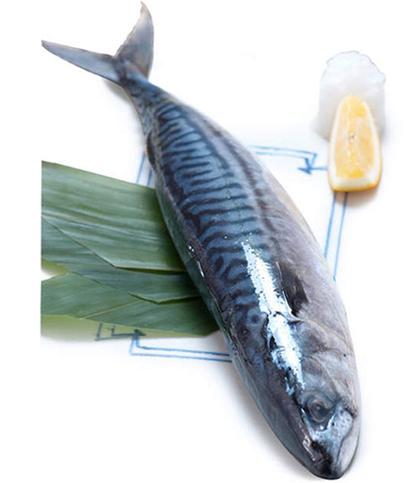冰岛进口青花鱼 野生深海鱼类挪威海产 新鲜冷冻鲭鱼450g 条新货