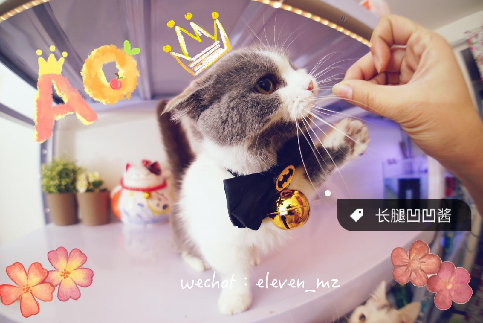 可爱猫咪狗狗宠物变装脖圈领结领带铃铛