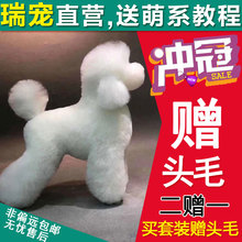 Rui pet genuine pet grooming fake hair model fake dog hair beautician shearing Teddy simulation body hair
