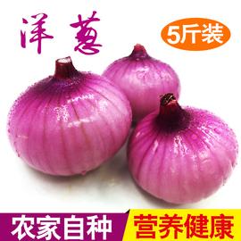 新鲜洋葱农家自种洋葱头红皮紫皮圆葱蔬菜西餐烧烤食材5斤装包邮