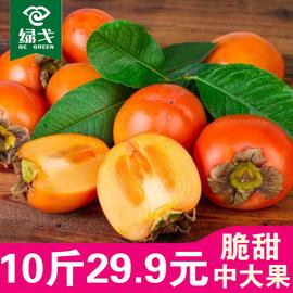 脆柿子新鲜水果10斤包邮应季大黄甜硬柿子非软陕西冻柿子5火晶柿