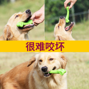 Dog bite dog puppy toys teeth stick Tactic large dog chews Golden Bear bone pet products