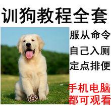 Поезд собака курс комплект поезд собака видео полностью золото волосы тянуть штифт больше край пастух мораль спорщик собака тедди фиксированный точка строка затем