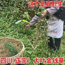 Деньги трава православная школа провинция сычуань дикий большой лист деньги трава традиционная китайская медицина лесоматериалы строка из все виды узел камень чай 60 мешок пузырь чай бесплатная доставка