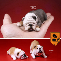 MR. Z-model] spot MR. Z English Bulldog model car Ornaments Naughty silly couple