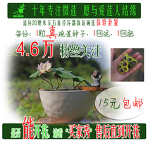 Open bowl lotus Seed experience package small container culture mini bowl Lotus Shadow capacity knee-set Lotus
