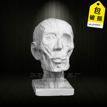 Painting Yue Fine Arts gypsum figure head anatomy muscle skull sketch gypsum like art room to write Still Life equipment