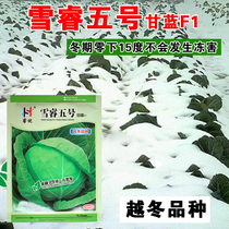 Anti-seasonal winter cabbage plain cabbage cold-resistant high-yield cabbage seeds snow core Fifth low temperature-16 ℃