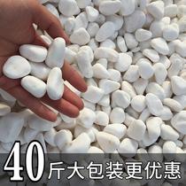 Natural white stone courtyard landscape paving pebbles fish tank fleshy pot paving decorative white size stone