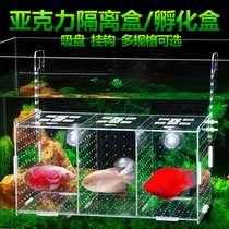 Fish tank transparent aquarium small fish fry hatch tiger fish gold wave white dot isolation box incubator breeding box single double more