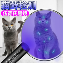 Woods lamp shines on cat urine fungus to detect flashlight ultraviolet fluorescent agent purple photomedia lamp dedicated