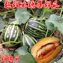 Super sweet Rock sugar melon seeds fragrant crisp melon Farmers spring Four seasons sowing fruit seeds high yield sugar