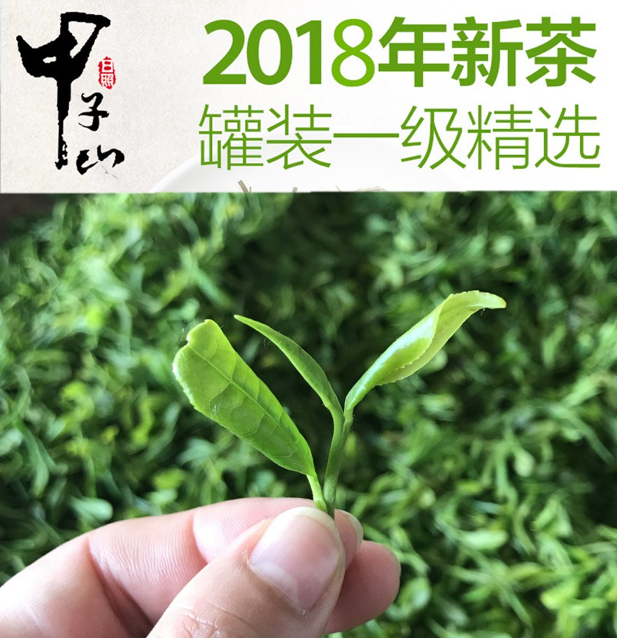 Recommendation of First Class Selected Rizhao Green Tea in Jiazishan Mountain 250g Alpine Cloud Green Tea, Chestnut Fragrant Spring Tea in 2019