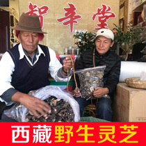 西藏特产灵芝野生正宗林芝赤灵芝干货草片小灵芝整枝250克纯赤芝