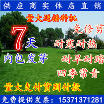 Lawn seeds American Four Seasons green lawn dog root grass seed stadium courtyard slope protection grass seeds do not trim and trample resistant