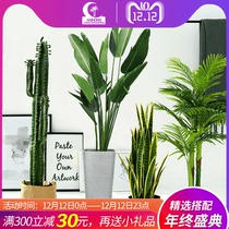 Nordic simulated plant decoration Tortoise Bamboo green plant potted traveler banana fake tree paradise bird indoor net red large