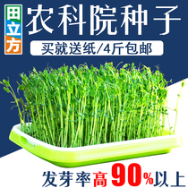 Sprout seedling seed bean sprouts Four Seasons wheat grass radish balcony pea vegetable pine willow Toon Hollow Paper growing vegetables