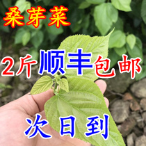 Fresh mulberry cauliflower edible grade mulberry leaf cuisine ice fresh mulberry cauliflower Hotel Specialty Cuisine Shun Fung 2 Jin