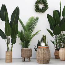 Living room Indoor fake tree Traveler Banana Nordic Simulation plant potted decoration green plant scattered tail anemone large tortoise Bamboo