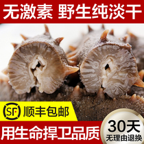 Deep sea bottom sowing sea cucumber dry goods pure dry sea cucumber Ginseng Wild 500 grams dry 60 liao Ginseng sea seepage gift Box