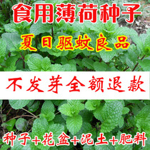 Summer plant Four Seasons mosquito eating lemon cat mint seed balcony indoor potted plants sowing seeds