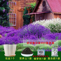 (Buy two to send multicolored stone) import lavender seeds forget-me-not seeds sun flower lupin flower