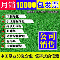 Imported turf seeds Manila grass seeds Four Seasons green not pruning dog root green turf slope protection King Grass seeds