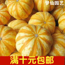 Fruits and vegetables seeds mini small gold melon seed pumpkin seeds orange melon seed
