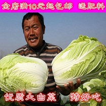 Vegetable seeds Four Seasons sowing baby cabbage seeds high quality pastoral garden terrace vegetable garden Spring summer sowing