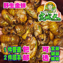 2018 Spot fresh knowing monkey wild Jincicada climbing Fork Ground mouse Tang monk meat cicada pupa 2 piece Shunfeng