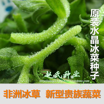 African ice vegetable ice grass seeds new green rare balcony potted cold-resistant vegetable seeds winter species eaten raw