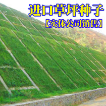 Slope greening lawn seed dog root slope protection grass seed protection of drought and heat protection grass seeds
