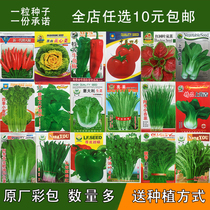 Vegetable SEED package Four Seasons balcony vegetable garden spring fruit potted spinach onion parsley leek seed
