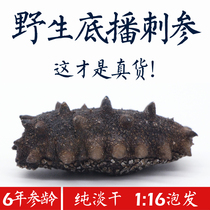 Wild dried sea cucumber 50g6 Year Dalian Pure Dry 12 deep sea sea cucumber dry gift Box Liao Ginseng origin