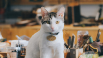 Four Nights of Creation offline gold workers experience DIY cat and dog brass pet brand name.
