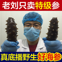 Old Liu ready-to-eat sea cucumber ginseng yantai sea cucumber wild sea cucumber yangma Island Authentic Ginseng 4 Jin Wear