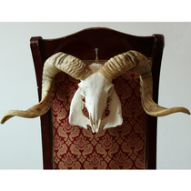 Tibetan Natural Pure Handmade Sheep Skull Specimens with Sheep Head Decoration
