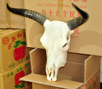 Natural Yak Skull Crafts interior decorations art bull head pendant real cow sheep skull