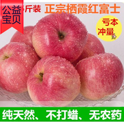 Yantai Qixia good apple 75#5 Jin boutique Apple fresh fruit red Fuji eight special purchases for the Spring Festival province shipping