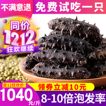 Sea cucumber Dry Goods wild 500 grams dry 60 head to 30 head Acanthopanax Ginseng Sea seepage gift box dalian dried sea cucumber 500g