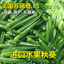 Imported fruit okra seed seedling beautiful green Japanese Super five-star okra organic vegetable high yield not old