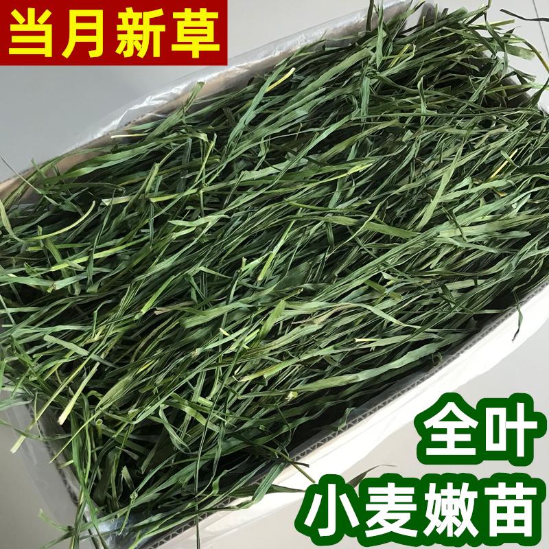 Высушите пшеничную траву сено цельнолистная пшеничная трава пшеничная трава пшеничная яму кролика дракон кошка голландская свинья морская свинка трава 500 граммов