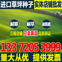 Import Four Seasons Green lawn seeds tall fescue dog root ryegrass Bluegrass Early bluegrass resistant trampling garden slope protection grass seeds