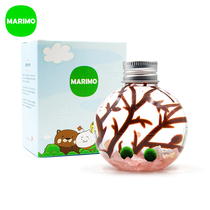 marimo Magic Ball ecological bottle happiness 毬 algae seaweed ball diy mini hydroponic plant special creative gift
