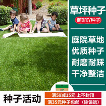 Rainbow Yue Chun acridine imported turf seeds tall fescue perennial ryegrass courtyard grass spring sowing