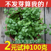 Parsley seed shandong old parsley seed vegetable seeds Spring Autumn Four Seasons balcony vegetable seed seed