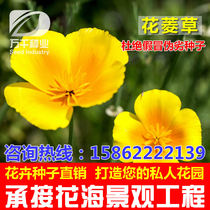 Flowers flower grass flowers seeds cold-tolerant Four seasons sowing garden flower sea landscape flowering plant seeds