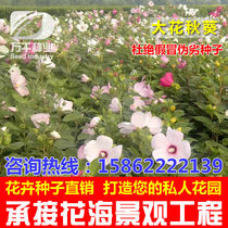 Flowers and plants of perennial flowers flowers seeds flowers gardens flowering plants and seeds