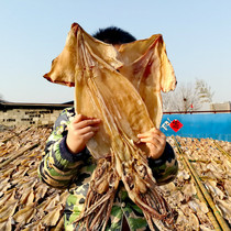 Squid dried 1000g3 to 6 wild raw squid dried dry goods strips dining soup fried vegetables