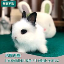 Live pet rabbit cover cat rabbit panda rabbit Fengyulian sisch rabbit long hairy rabbit Teacup Rabbit bag live bag health